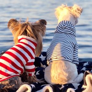 Kuva: Koiraystävällinen Hanko/ Visit Hanko