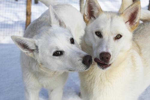 koirat 2
